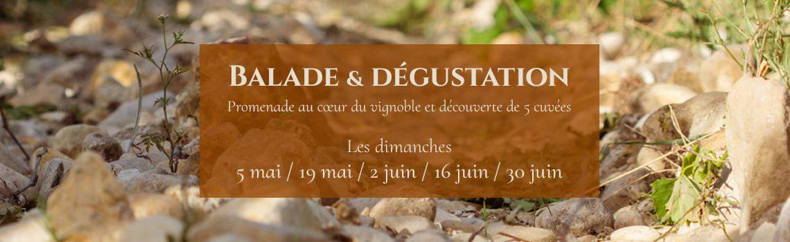 Balade & dégustation au Domaine Au 7ème Clos en 2019